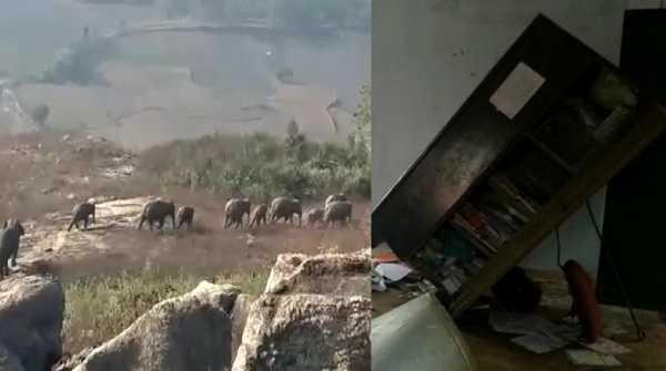 जंगली हाथियों ने मचाया उत्पात, स्कूल में रखे मध्याह्न भोजन के अनाज को खाया, संपत्ति को पहुंचाया नुकसान
