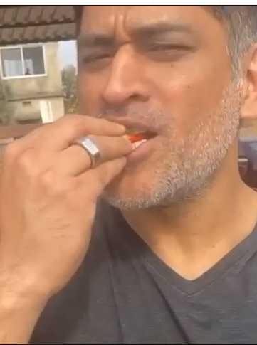 धोनी ने अपने फार्म के स्ट्राबेरी खाते हुए शेयर किया वीडियो, वायरल